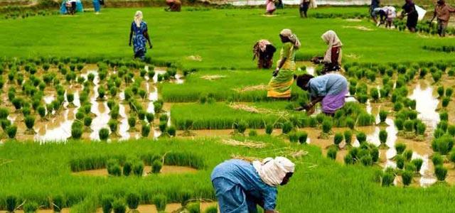 Agirculture solar India